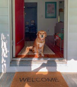 Dog in doorway welcoming