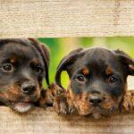 puppies looking thru fence