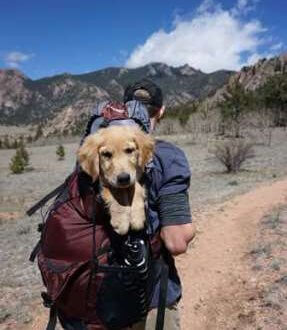 Man with golden retriever pup in backpack