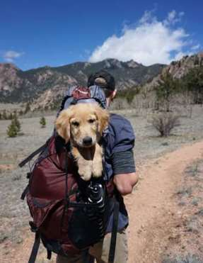 Man hiking with puppy golden retriever