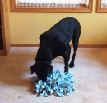 black lab search and find